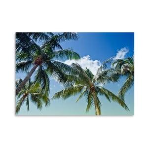 Plagát Palm Trees