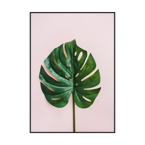 Plagát Imagioo Monstera Leaf, 40 × 30 cm