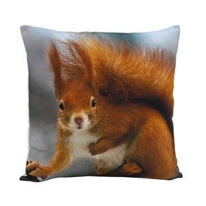 Vankúš Squirrel Ginger, 45x45 cm