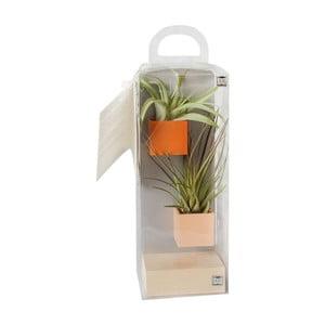 Sada 2 malých magnetických kvetináčov s podstavcom a rastlinkami, oranžová