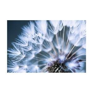 Obraz na plátne OrangeWallz Blue Dandelion, 60 x 90 cm