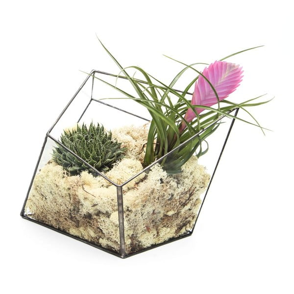 Terárium s rastlinami Super Aztec Diamond