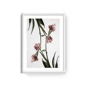 Obraz Piacenza Art Dendrobium, 30 × 20 cm