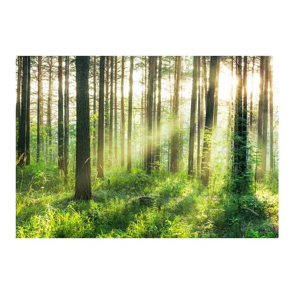 Veľkoformátová tapeta  Svetlo v lese, 366x254 cm