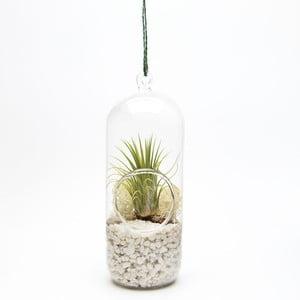 Terárium s rastlinami Cylinder