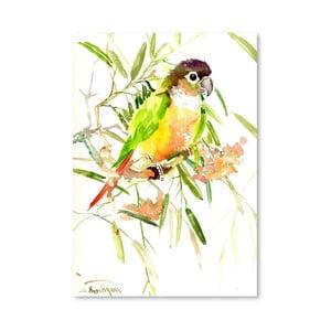 Plagát Parrot