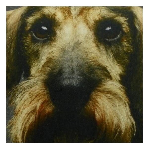 Vankúš Shaggy Dachshund with Mustache 50x50 cm
