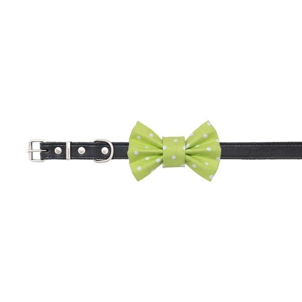 Svetlo zelený charitatívny psí motýlik s bodkami Funky Dog Bow Ties, veľ. M