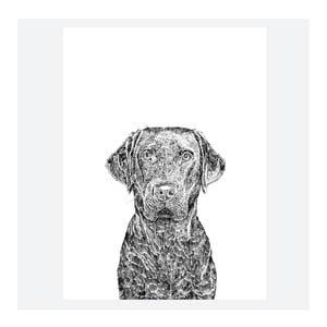 Plagát Max the Labrador, 30x40 cm