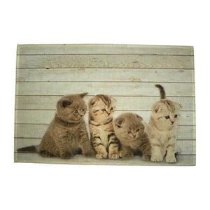 Prestieranie Four Kitten British Shorthare 40x30 cm