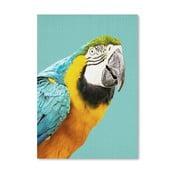 Plagát Tropic Parrot
