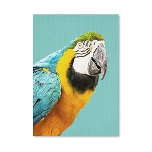 Plagát Tropical Parrot