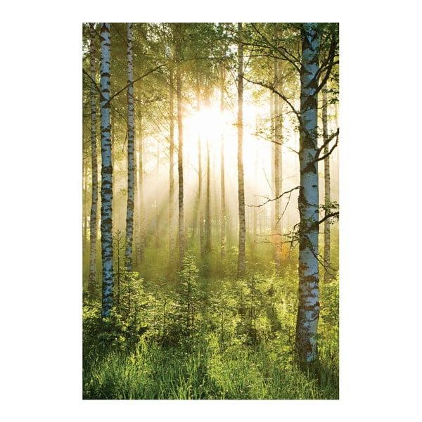 Veľkoformátová tapeta Presvetlený les, 158x232 cm