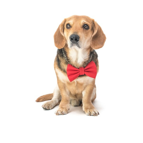 Červený charitatívny psí motýlik Funky Dog Bow Ties, veľ. S