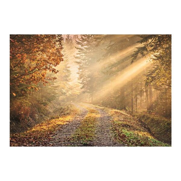 Veľkoformátová tapeta Lesný chodník, 360x253 cm