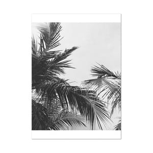 Plagát HF Living Botanic Palm, 50×70 cm