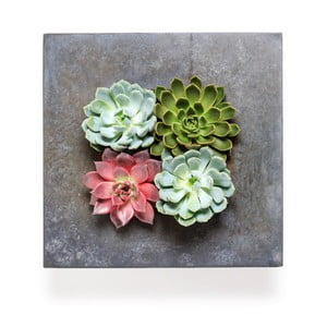 Nástenný kvetináč so sukulentmi Wall, 36x36 cm
