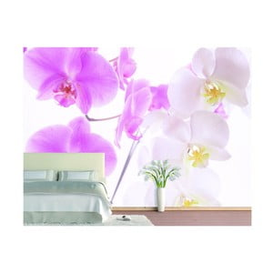 Tapeta Graceful Orchids, 400x280 cm