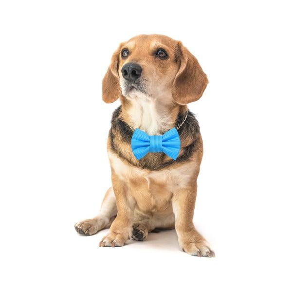 Tyrkysový charitatívny psí motýlik Funky Dog Bow Ties, veľ. S