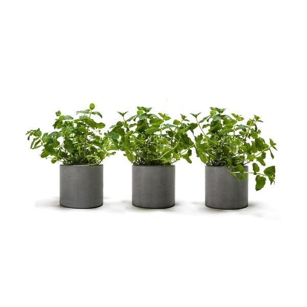 Set 3 betonových kvetináčov Spicepot 12