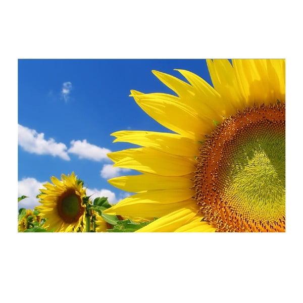 Obraz Slnečnice každý deň, 45x70 cm