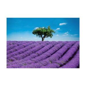 Veľkoformátová tapeta  Provence, 366x254 cm