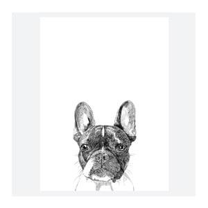 Plagát Murphy The Boston Terrier, 30x40 cm