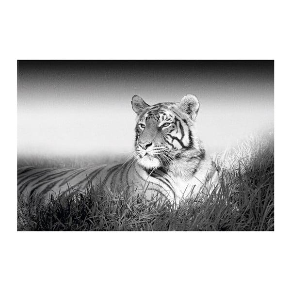 Fotoobraz Tiger, 51x81 cm