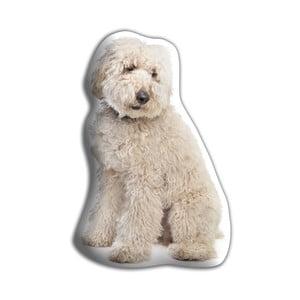 Vankúšik Adorable Cushions Labradoodle