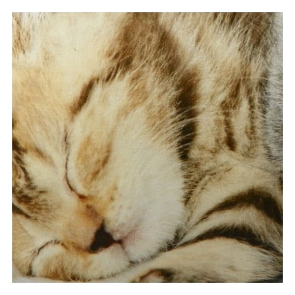 Vankúš Kittens On Blanket 50x35 cm