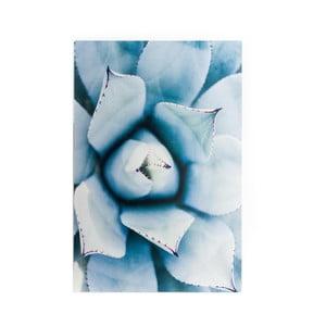 Obraz z kovu Velvet Atelier Suculent, 40×60 cm