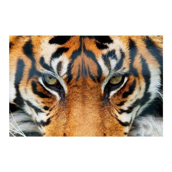 Maxi plagát Tiger, 175x115 cm