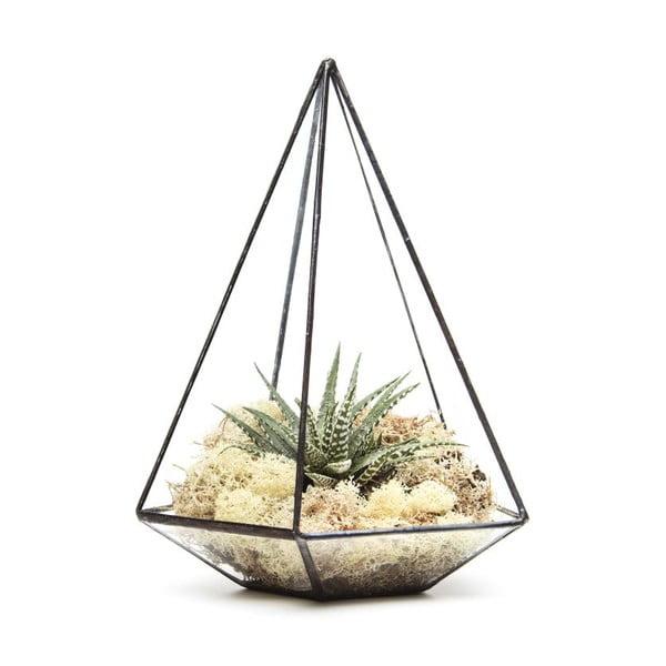 Terárium s rastlinami Jewel