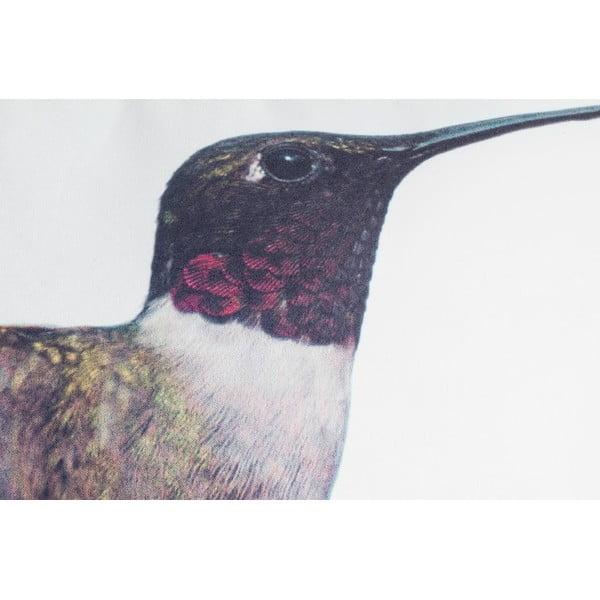 Vankúš Fisura Hummingbird, 40x60cm