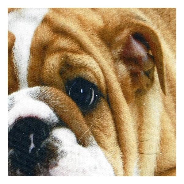 Vankúš Mars&More Bulldog, 50 x 50 cm