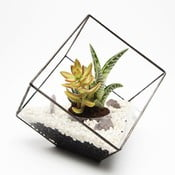 Terárium s rastlinami Cube