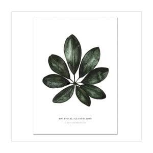 Plagát Leo La Douce Schefflera Arboricola, 21x29,7cm