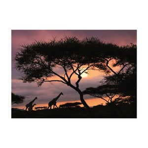Tapeta African Safari, 400x280 cm