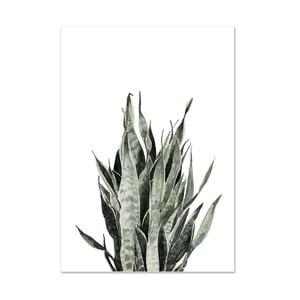 Plagát Leo La Douce Sansevieria, 21x29,7cm