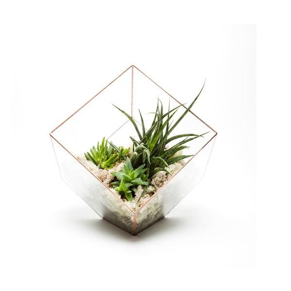 Terárium s rastlinami Supersize Cube, svetlý rám