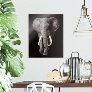 Sklenený obraz OrangeWallz Elephant, 40 x 50 cm