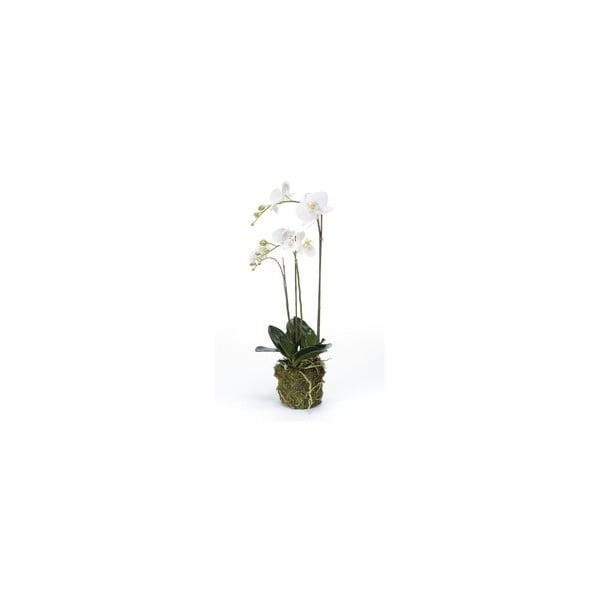 Umelý kvet Orchidea Phalaenopsis, 70 cm