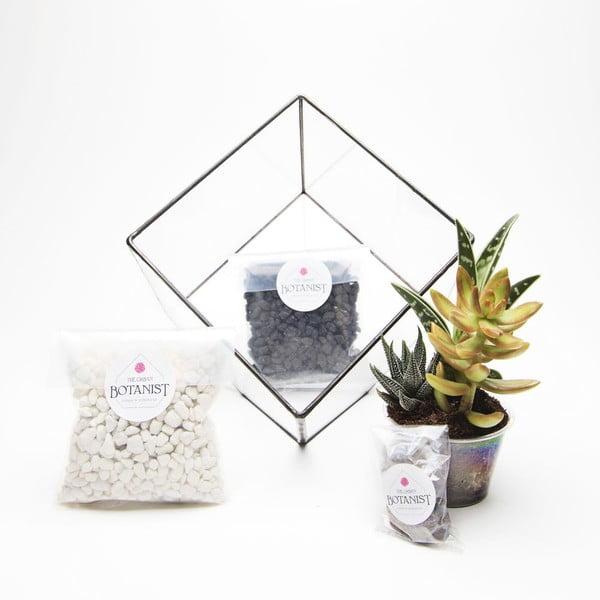 Terárium s rastlinami Aztec Cube DIY