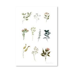 Plagát Delicate Botanica Lpieces by Shealeen Louise, 30 x 42 cm