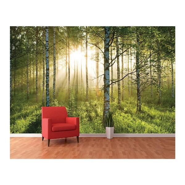 Veľkoformátová tapeta Presvetlený les, 360x253 cm