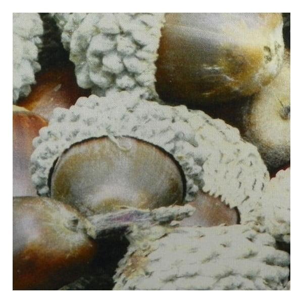 Vankúš Wood Acorn 50x50 cm