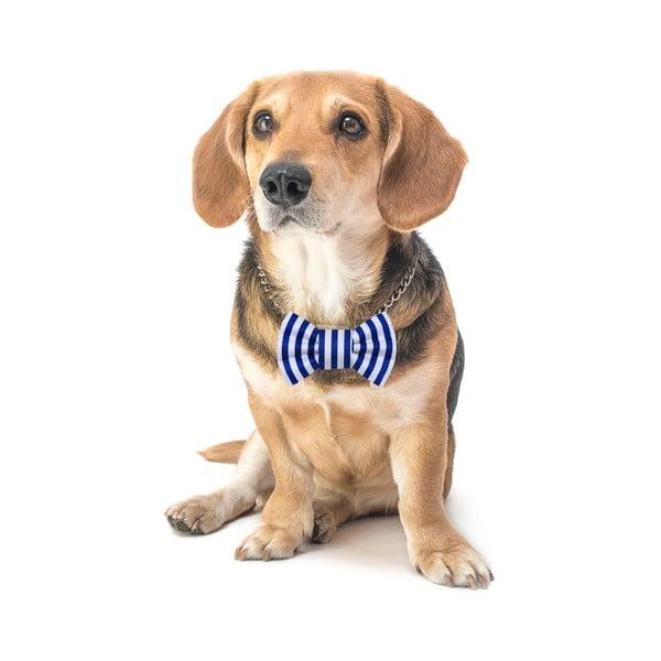 Modrý charitatívny psí motýlik s proužky Funky Dog Bow Ties, veľ. M