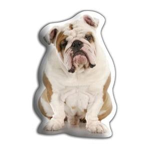 Vankúšik Adorable Cushions Buldog