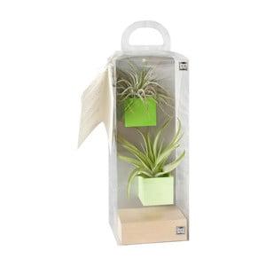 Sada 2 malých magnetických kvetináčov s podstavcom a rastlinkami, zelená
