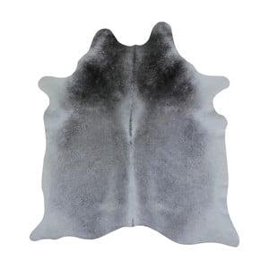 Sivý koberec z hovädzej kože, 290 x 165 cm